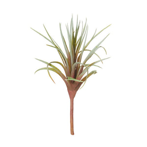 Tillandsia Brown Green