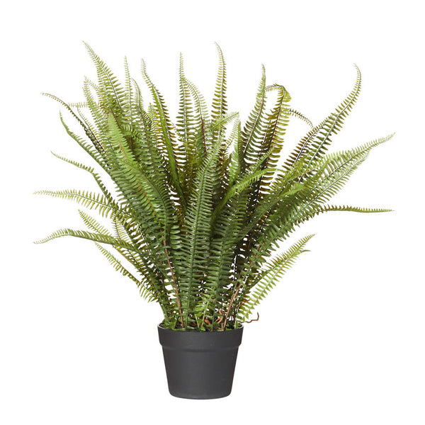 Boston Fern Garden Pot