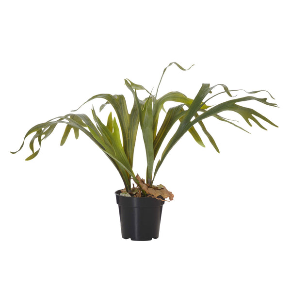Staghorn Fern Garden Pot