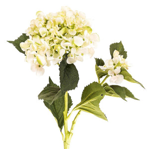 Hydrangea Water Cream Green