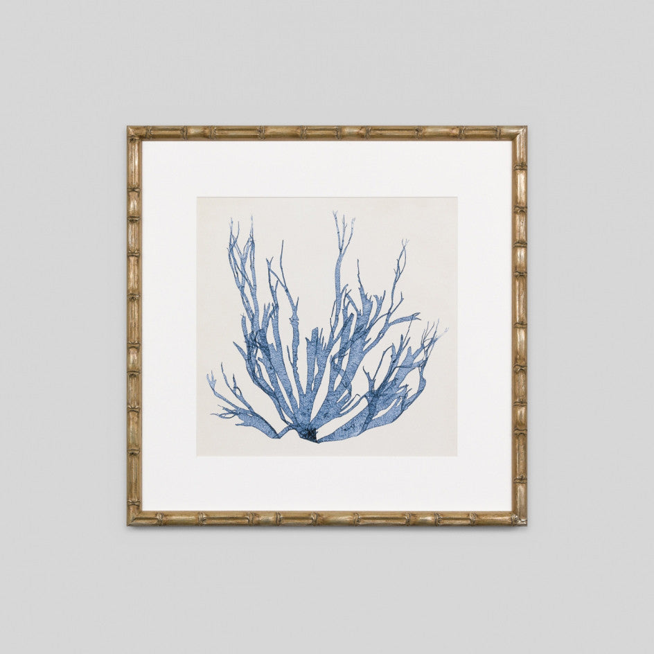 Coastal Seaweed No.1 Wall Art
