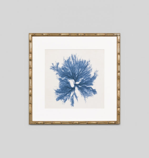 Coastal Seaweed No.5 Wall Art
