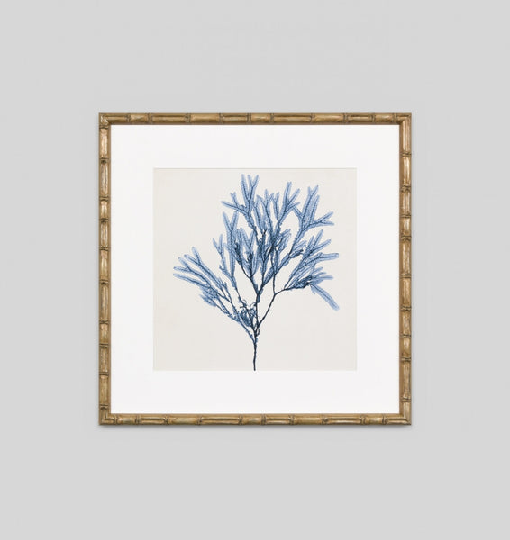 Coastal Seaweed No.8 Wall Art