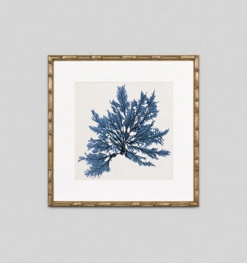 Coastal Seaweed No.9 Wall Art