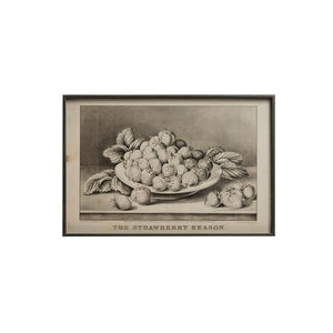 Vintage Reproduction Fruit Print