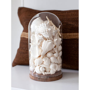 Glass Dome with White Shells