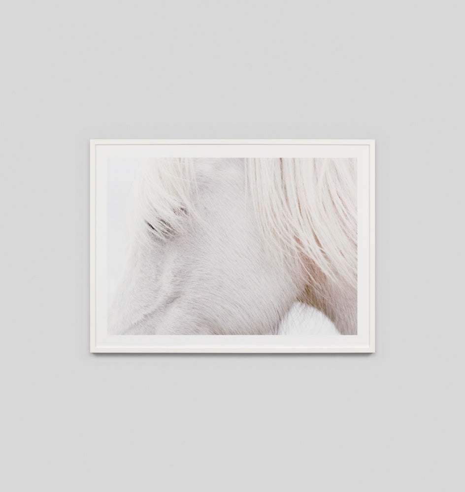 White Pony Wall Art