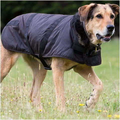Outback Clancy Oilskin Dog Coat
