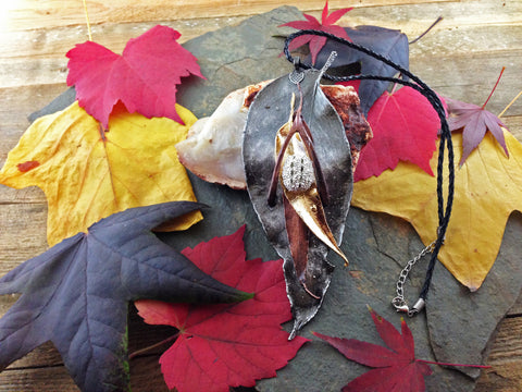 Gum Leaf Statement Piece - Various Finishes - Cat No 100 - Leaf Seed Pod Shell - 1