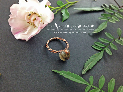 Crazy Lace Agate Ring - Antique Copper - Cat No 532 - Leaf Seed Pod Shell - 1