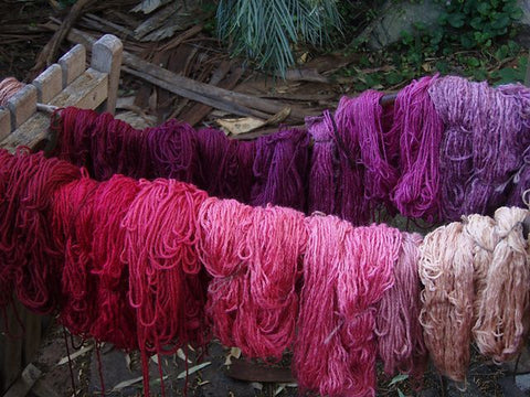 Cochineal dyes wool