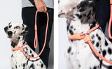 Zee.Dog Slip On Leash - My Pooch and Co.