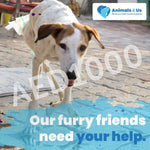 AED1,000 VOUCHER - My Pooch and Co.