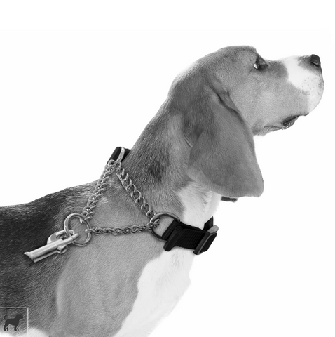 M-Pets Kombi Semi-Choke Collar 2in1 - My Pooch and Co.