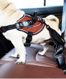 PETKIT Secure Seat Belt for Dogs - My Pooch and Co.