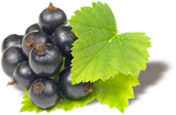 New Zealand Blackcurrants - Superfood!