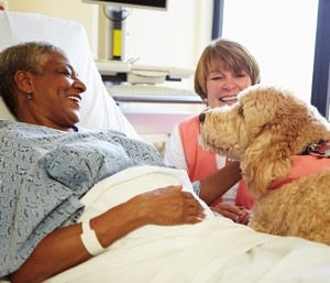 Therapy dog in hospital bed
