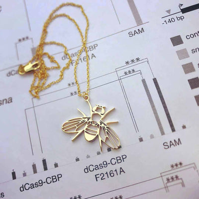 Drosophila fruit fly necklace - science jewelry gift for a student or researcher in biology or genetics. Gold version.