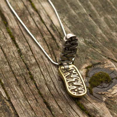 Mitochondria Necklace - a 2-layer locket mitochondrion pendant. Great jewelry gift for teacher or student in biology or science. This photo shows the pewter in front and brass in back.