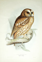 John Gould (1804 –1881), The Birds of Europe