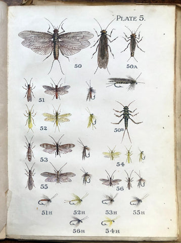 flat lay of insects used by fly fishermen or anglers