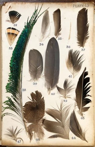 Bird feathers used in the identification of species for fly fishing artificial flies