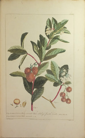 Philip Miller (1691-1771), Figures of the most Beautiful, Useful, and Uncommon Plants described in The Gardeners' Dictionary...