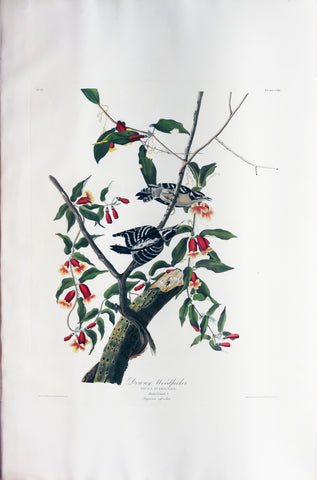 John James Audubon (1785-1851), Plate CXII Downy Woodpecker