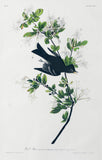 John James Audubon (1785-1851), Plate CXV Wood Pewee
