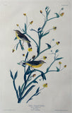 John James Audubon (1785-1851), Plate CXLV Yellow Red-poll Warbler