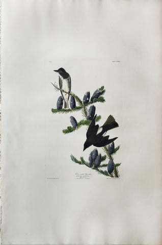 John James Audubon (1785-1851), Plate CLXXIV Olive sided Flycatcher