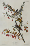 John James Audubon (1785-1851), Plate CLXXXVIII Tree Sparrow