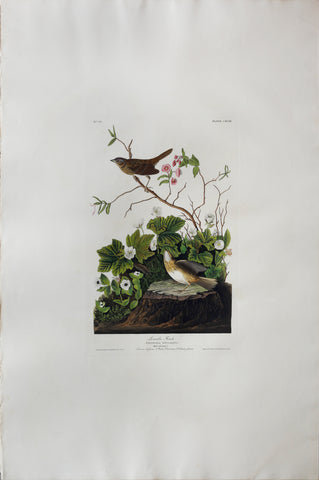 John James Audubon (1785-1851), Plate CXCIII Lincoln Finch