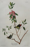 John James Audubon (1785-1851), Plate CXCV Ruby crowned Wren