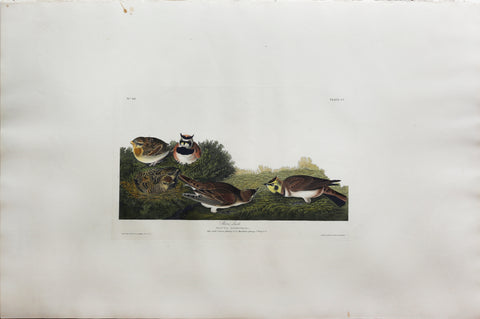 John James Audubon (1785-1851), Plate CC Shore Lark