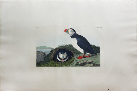John James Audubon (1785-1851),  Plate CCXIII Puffin