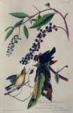 John James Audubon (1785-1851), Plate XXXIV Worm Eating Warbler