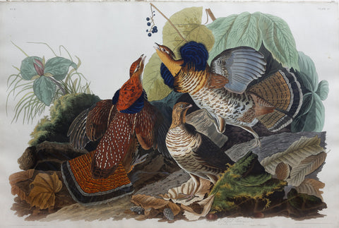 John James Audubon (1785-1851), Plate XLI Ruffed Grouse