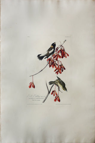 John James Audubon (1785-1851), Plate LIV Rice Bird