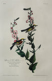 John James Audubon (1785-1851), Plate LIX Chestnut-sided Warbler