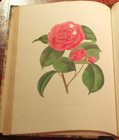Alfred Chandler (1804-1896) William Beattie Booth (?1804-1874), Illustrations And Descriptions Of The Plants Which Compose The Natural Order Camellieae