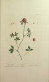 Elizabeth Blackwell (C. 1700-1758), A curious herbal...