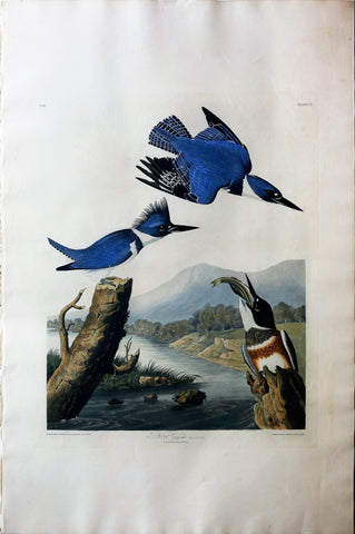 John James Audubon (1785-1851), Plate LXXVII Belted Kingfisher