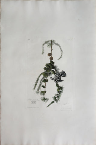 John James Audubon (1785-1851), Plate XC Black and White Creeper