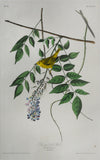John James Audubon (1785-1851), Plate XCV Blue-eyed yellow Warbler