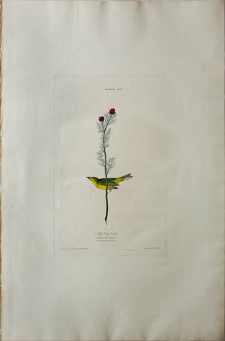 John James Audubon (1785-1851), Plate IX Selby's Fly Catcher