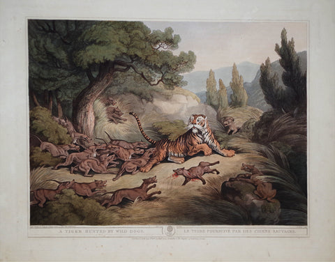 Thomas Williamson (1758-1817) and Samuel Howitt (1765-1822), A Tiger Hunted by Wild Dogs
