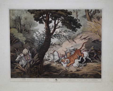 Thomas Williamson (1758-1817) and Samuel Howitt (1765-1822)  A Tiger Seizing a Bullock in a Pass