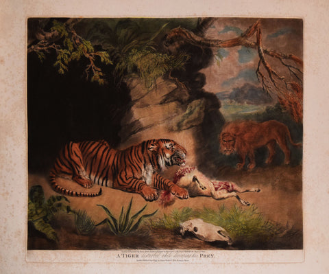 James Ward (1769-1859), A Tiger Disturbed While Devouring His Prey