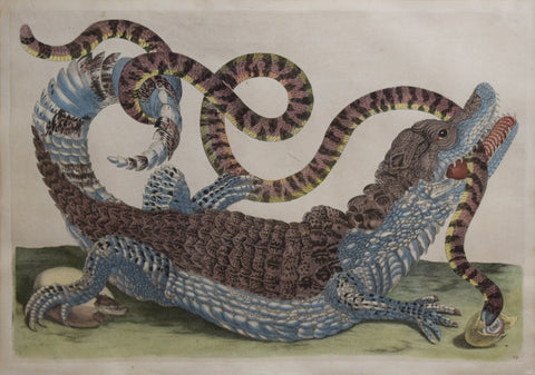 Maria Sibyllia Merian (1647-1717), [Alligator with Snake] Plate 69